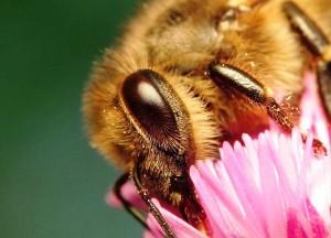 зрение пчёл
