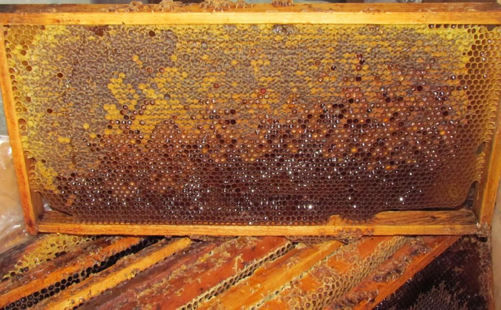 Сотовый мёд с пергой